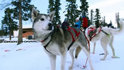 Dog Sledding-Snow Mobiling